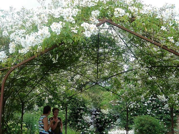 welke planten horen in een boerentuin
